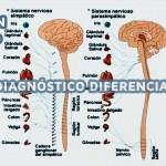 CURSO DE DIAGNOSTICO DIFERENCIAL VEGETATIVO