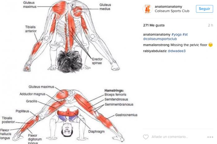 anatomia-anatomy