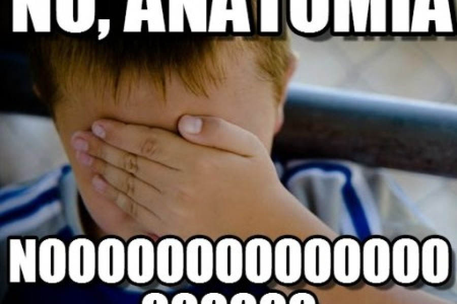Memes de Anatomía