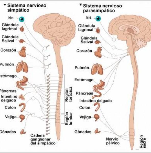 curso de vegetativo para fisioterapeutas