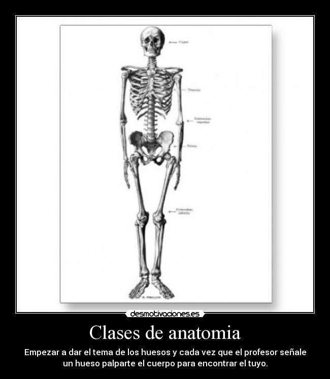 el_esqueleto_humano_expuesto_tarjeta_postalp239126810138776219z85wg_400
