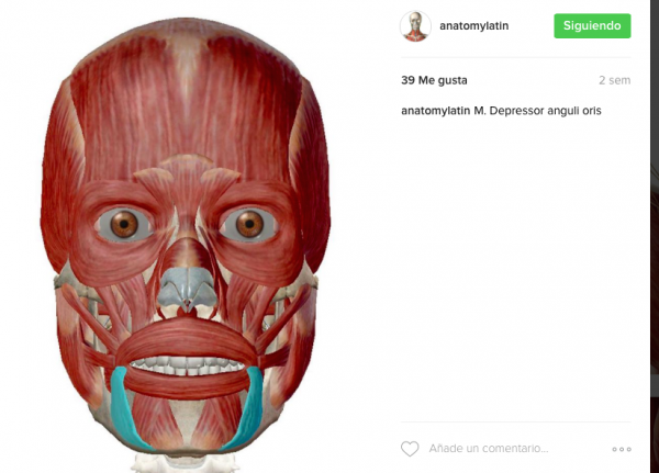 instagram-anatomy-latin