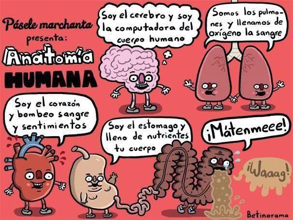 Memes de Anatomía -