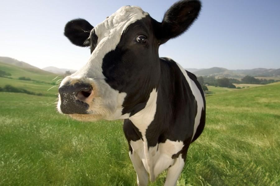 ¿La leche produce osteoporosis?