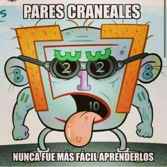 pares-craneales