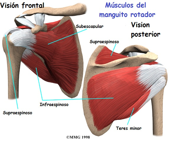 patologia de hombro