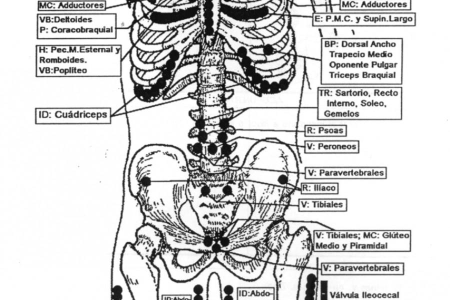 Qué son los puntos de Chapman o puntos neurolinfáticos